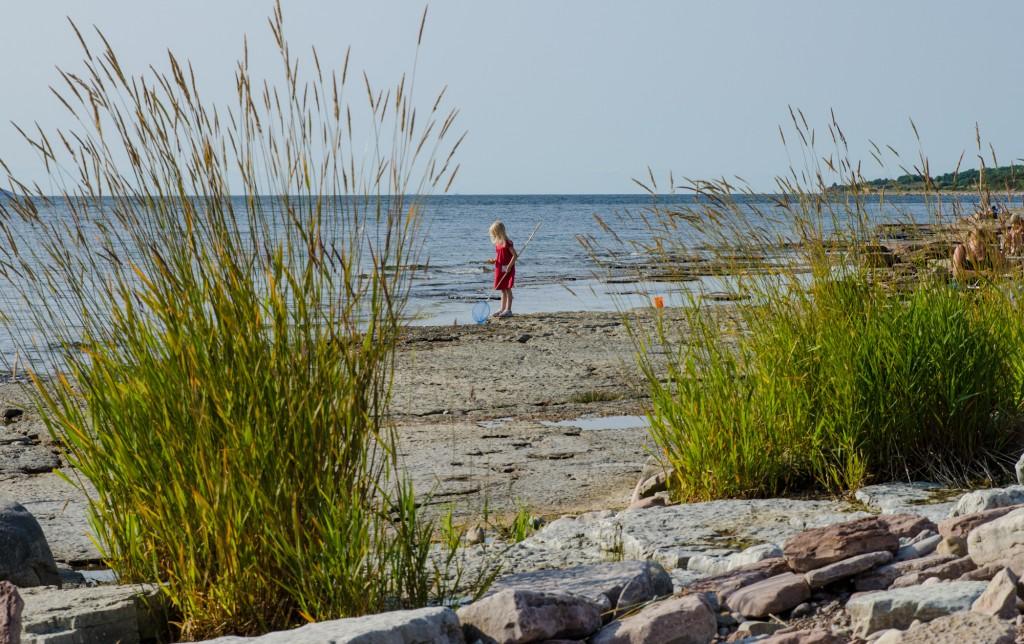 Liten flicka letar saker på stranden. Öland.