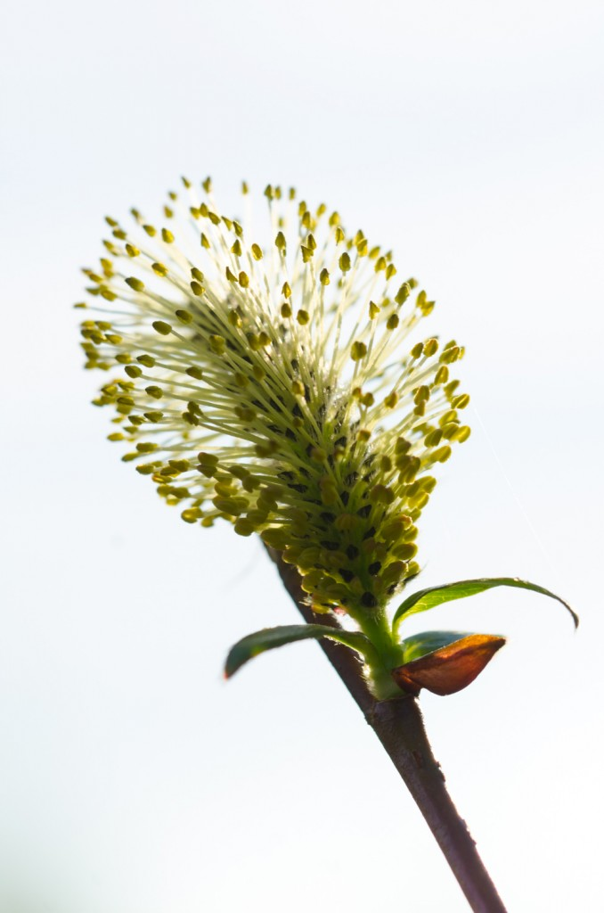 Blomma i närbild. Gillar mitt Tamron 90 mm macro!