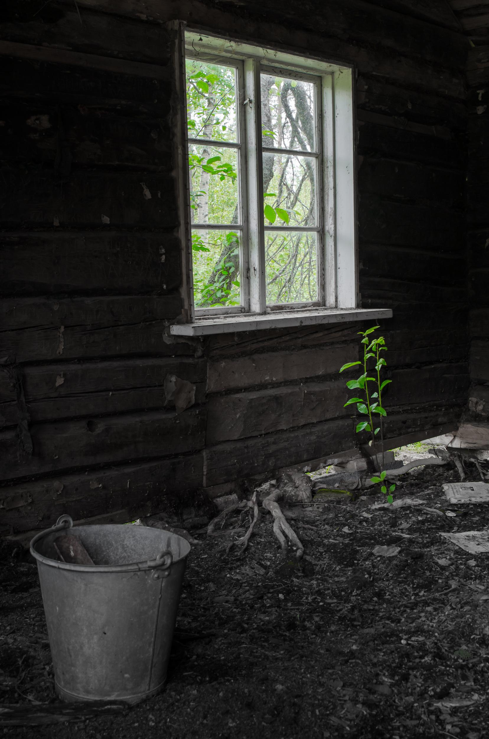 Ödehus i Övertorneå. Jag tycker synd om plantan, den får det tungt i framtiden!