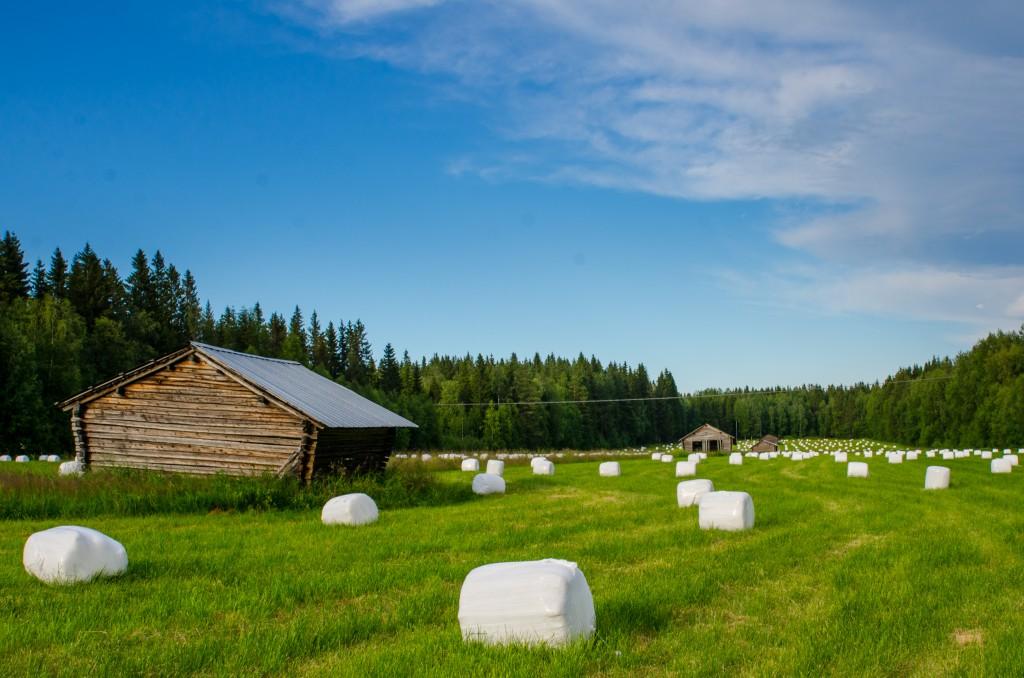 Gamla lador och plastbollar mellan Luleå och Boden vid väg 97.