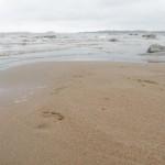 Fotspår på stranden. Lulnäsudden, Luleå.