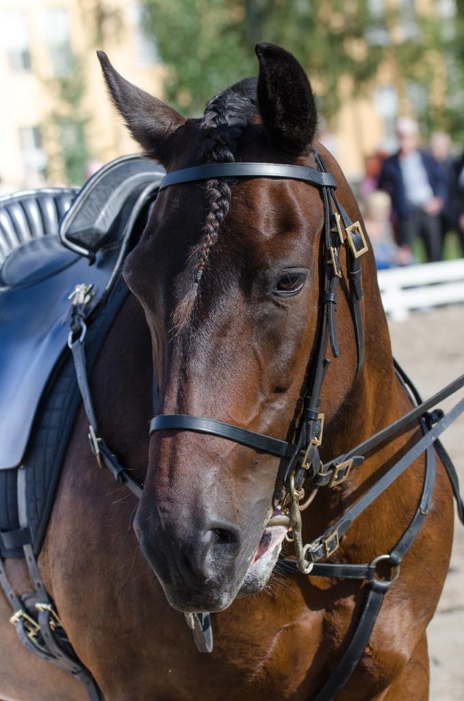 Jag är ju inte så intresserad av hästar men denna var ganska vacker...