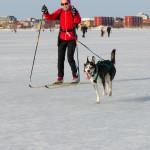 Det fanns många sätt att ta sig fram, hund och skidor var ett sätt...