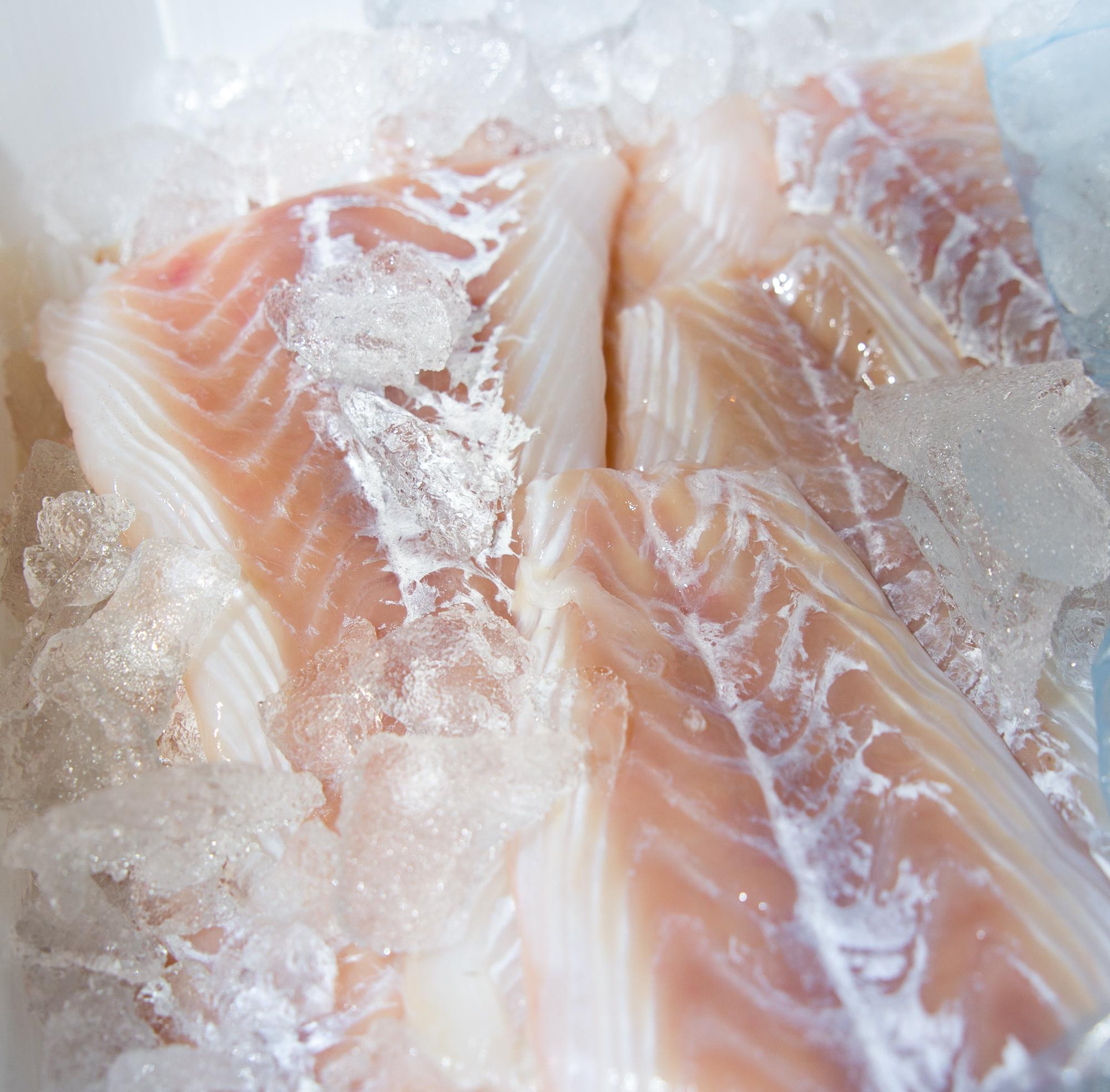 Frisk fisk…
