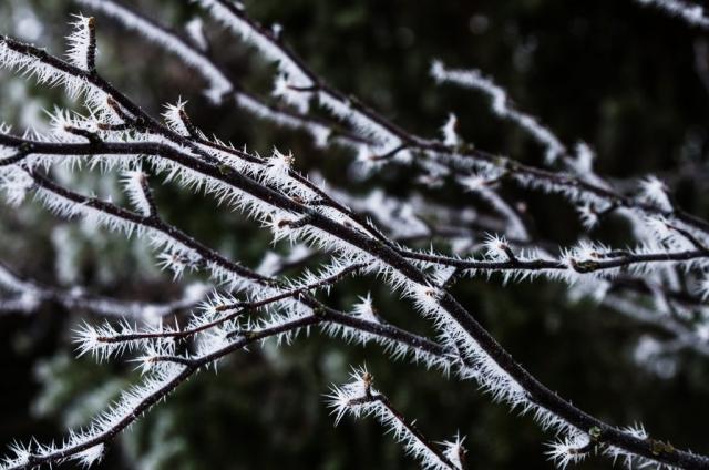 Frosttaggar.