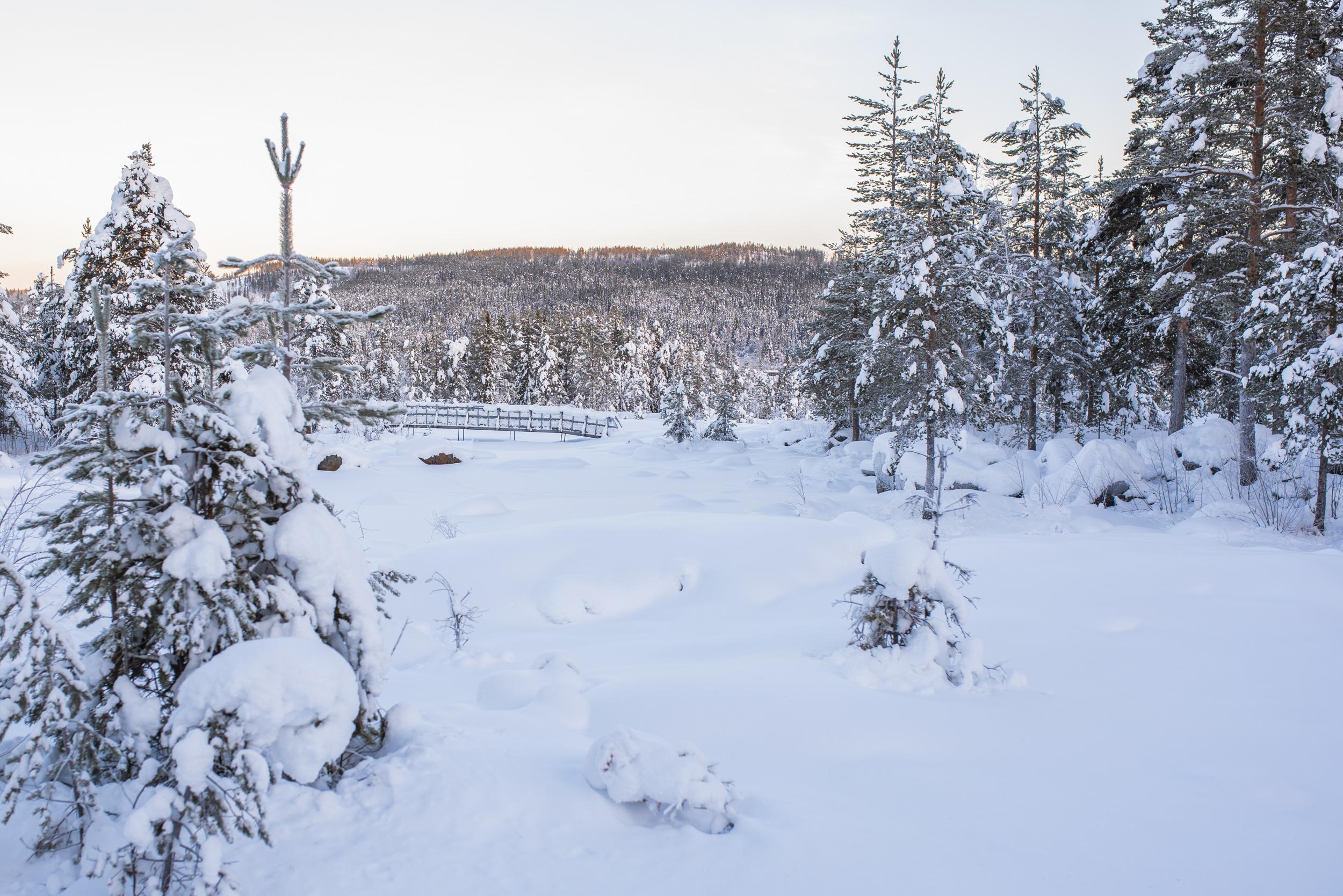 Vinter i Storforsen. Varför är man inte här oftare, alla årstider?
