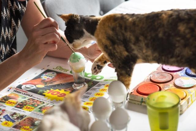 Ser fint ut... Eller kanske mer roligt, ur ett kattperspektiv, penslar är ju alltid kul!