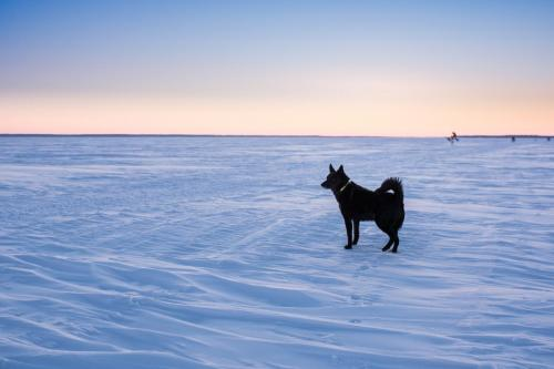 Luleå skärgård en tidig morgon i mars.Luleå skärgård en tidig morgon i mars. Äntligen ett tillfälle jag skulle kunna tänka mig att åka skidor!