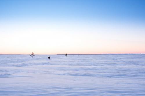 Luleå skärgård en tidig morgon i mars. Luleå skärgård en tidig morgon i mars. Äntligen ett tillfälle jag skulle kunna tänka mig att åka skidor!