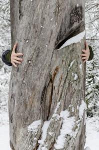 Rikti Dokkas 2014.  För att illustrera hur stort trädet är så försöker Stefan som har ett par av Luleås längsta armar hålla runt trädet. Men misslyckas grovt!
