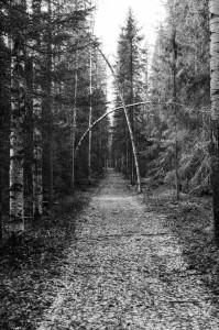 Vägen till Ristjäls gruvor. Mysig men kändes som björnar och älgar kunde stå överallt!