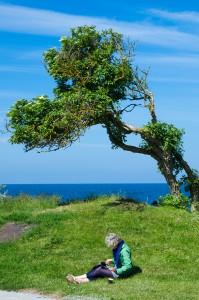 Visby. Krokiga träd och ryggar.
