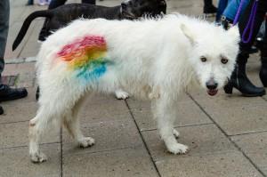 Luleå Pride 2016. En brandad hud som inte trivdes i tidigare regn...