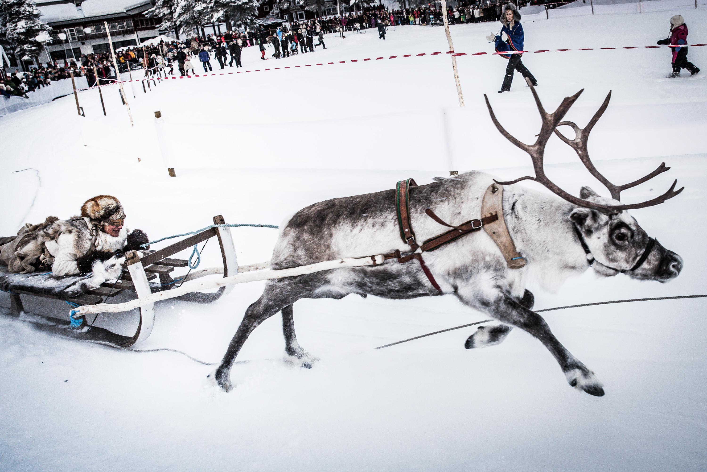 Renrace på Jokkmokks marknad, såg roligt ut, det gäller att hålla sig kvar. Och bra mycket mer fart på renarna än man brukar se när de vandrar omkring vid vägarna.