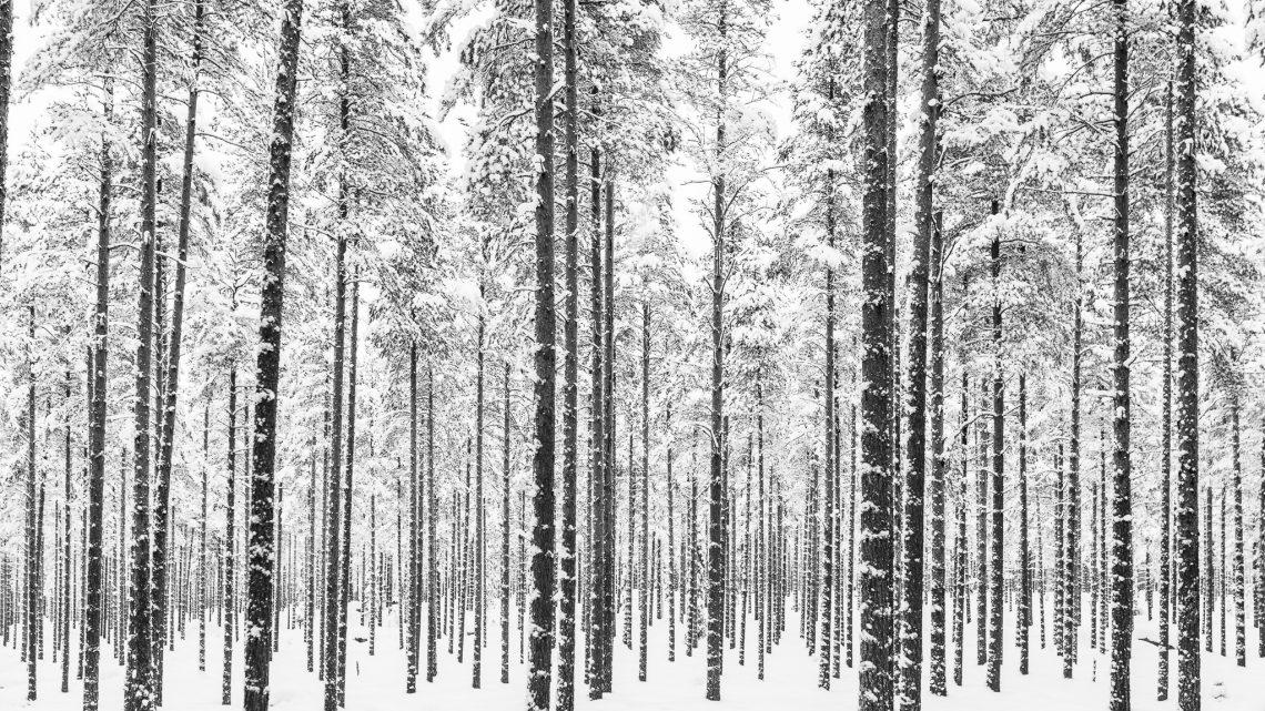 Sävast i vinterskrud.