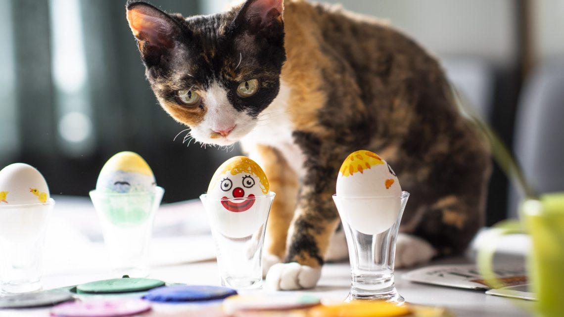 Måla påskägg med katter…