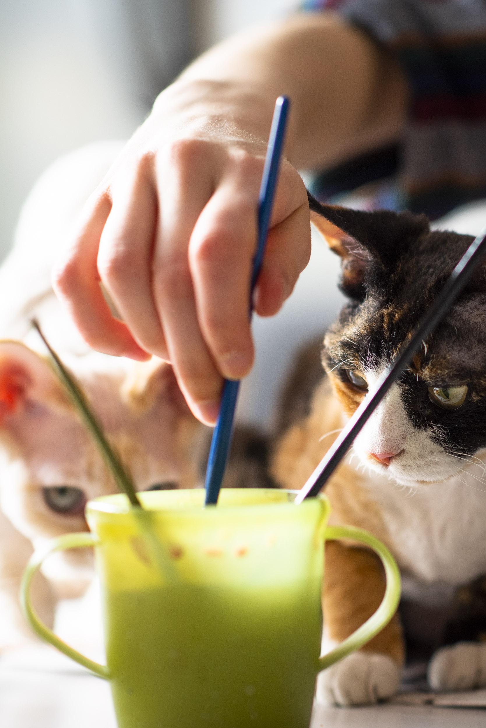 Intresset av påskägg bland katterna var på topp!