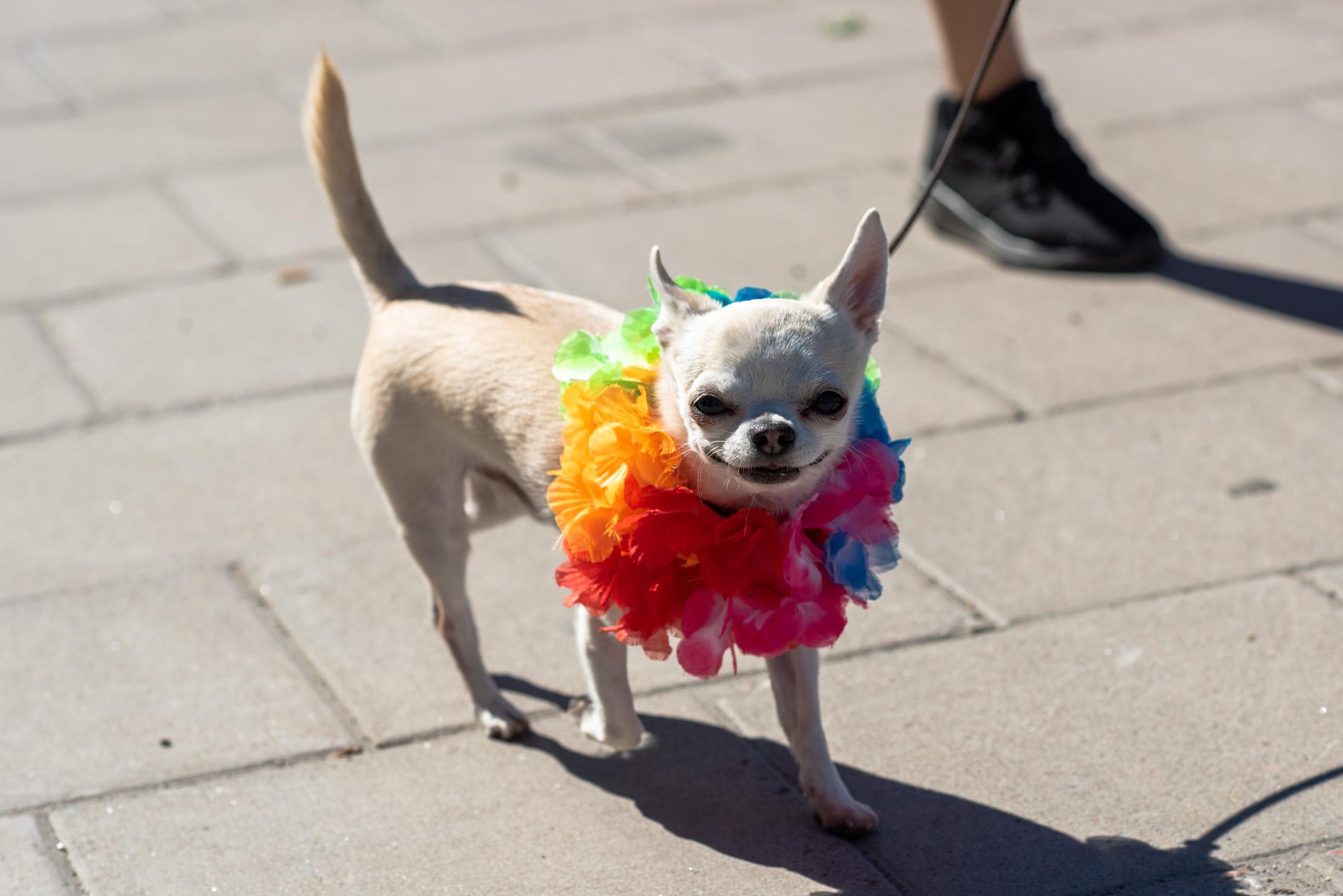 Luleå Pride 2019 i underbart väder. Alla är inkluderade...