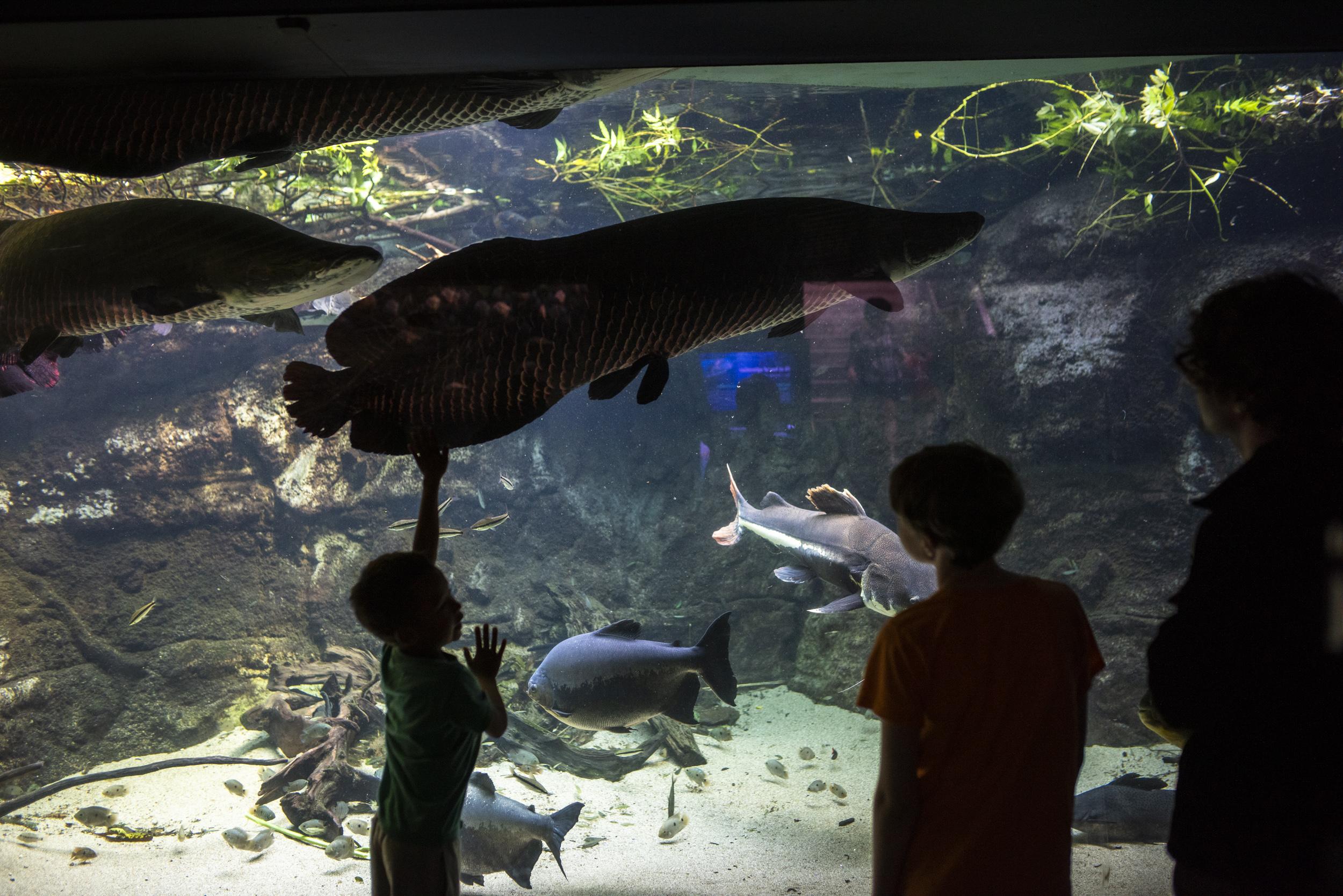 Stora fiskar fanns det också!