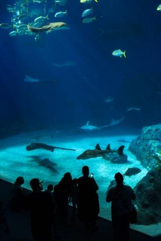 Otroligt stort akvarium!