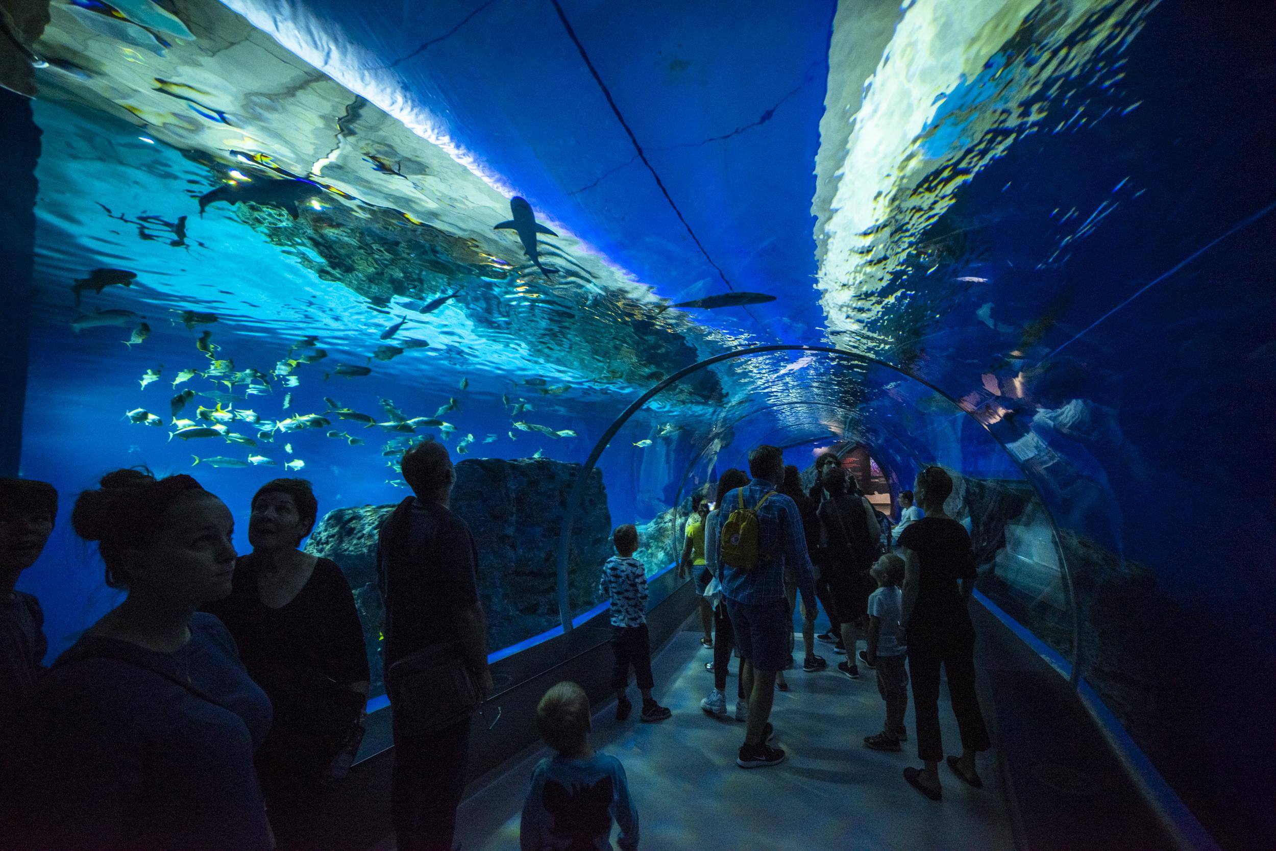 Tunneln genom akvariet var häftig! Svårt att inte gå med öppen mun!