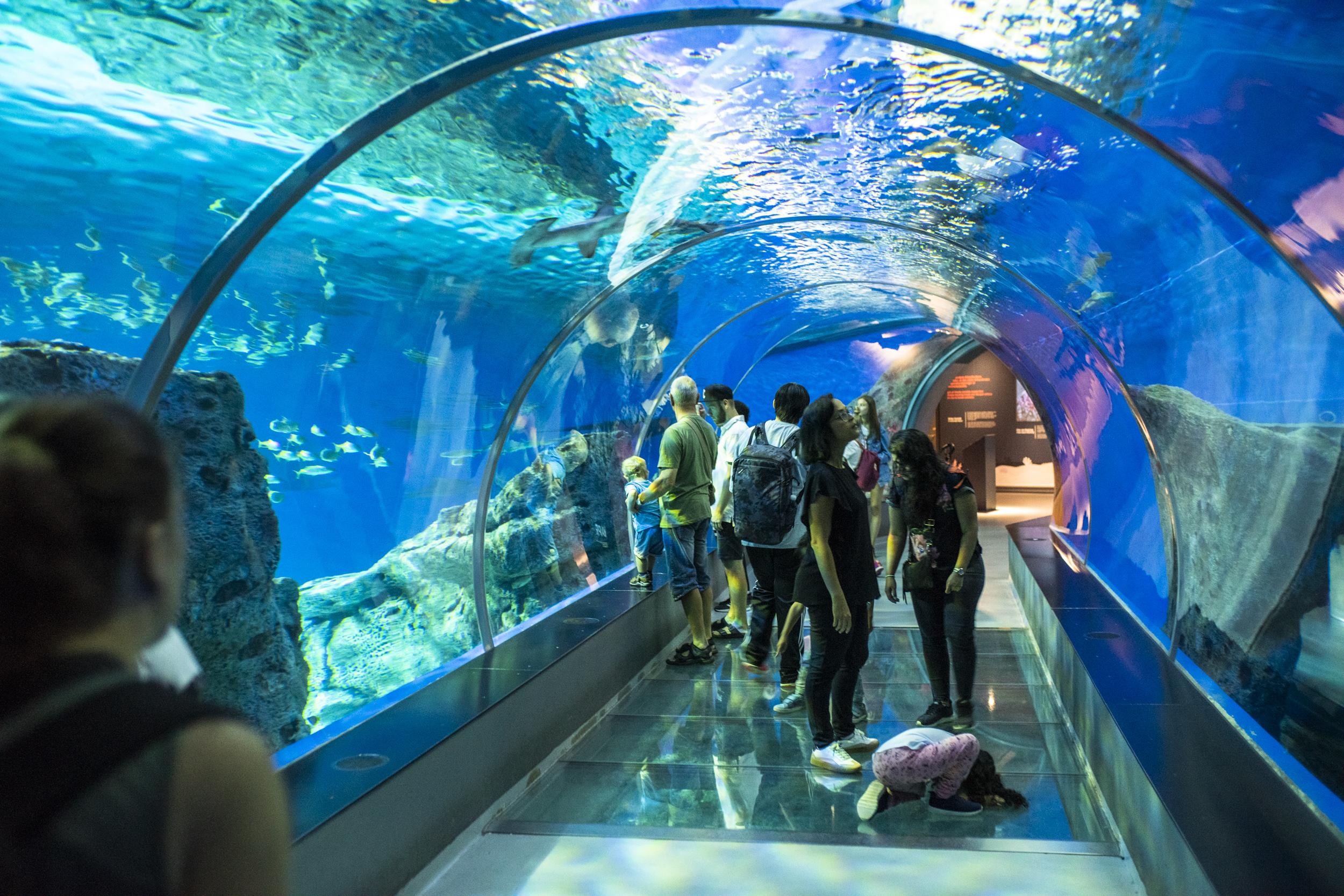 Och även under tunneln fanns det fiskar!