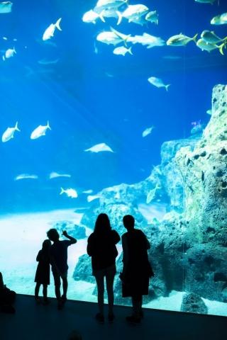 Om bara alla visste vilket tryck det är längst ned i akvariet, kräver tjockt glas för att hålla!
