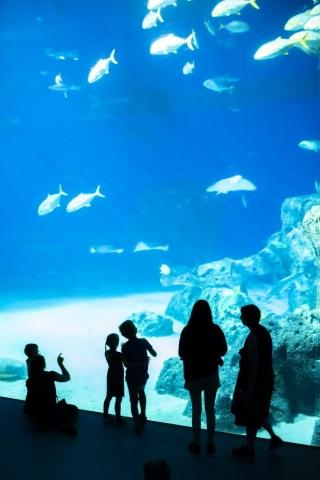 Mäktig känsla att stå vid glasväggen till akvariet, den var hög!