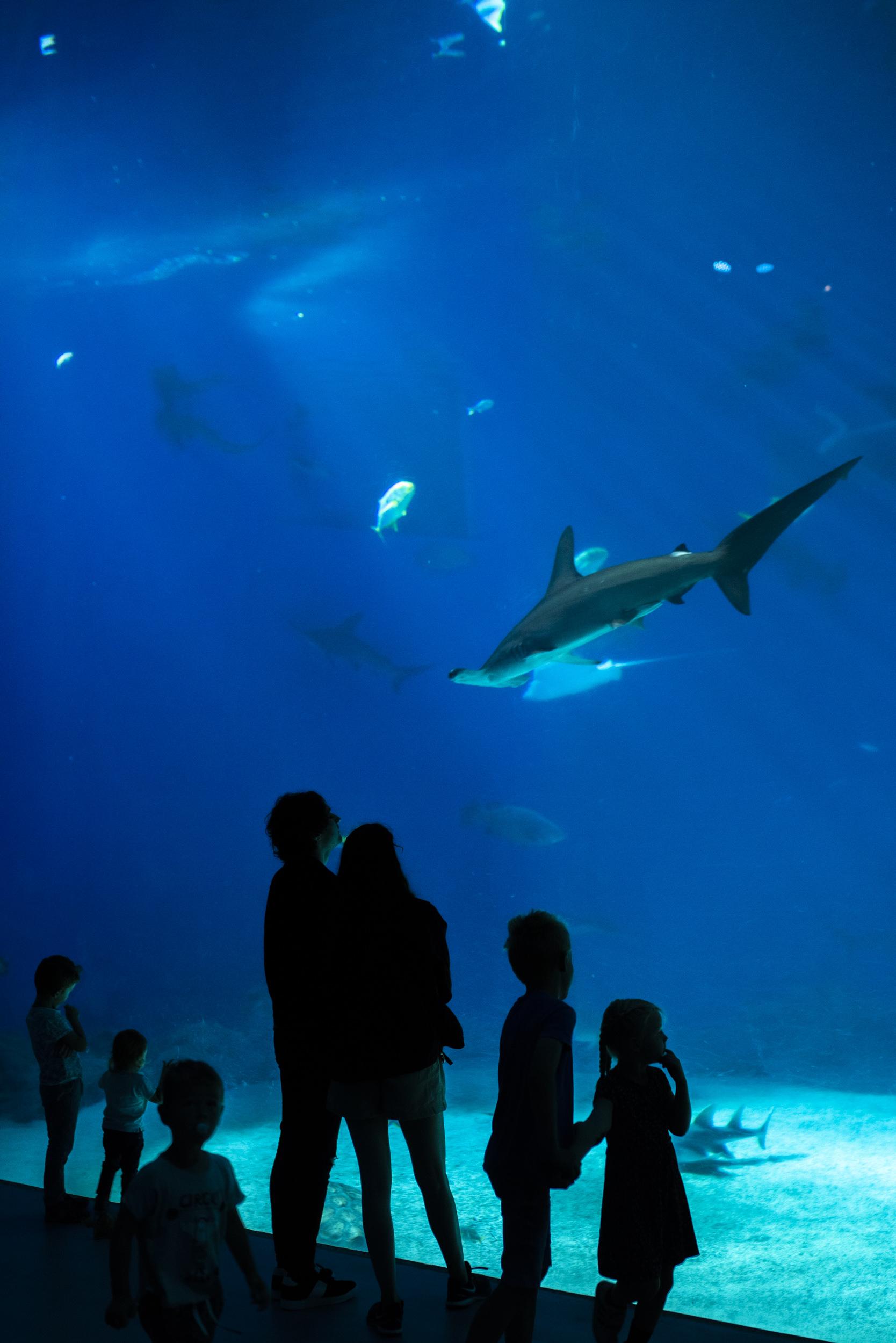 Akvariet lockade både stora och små!