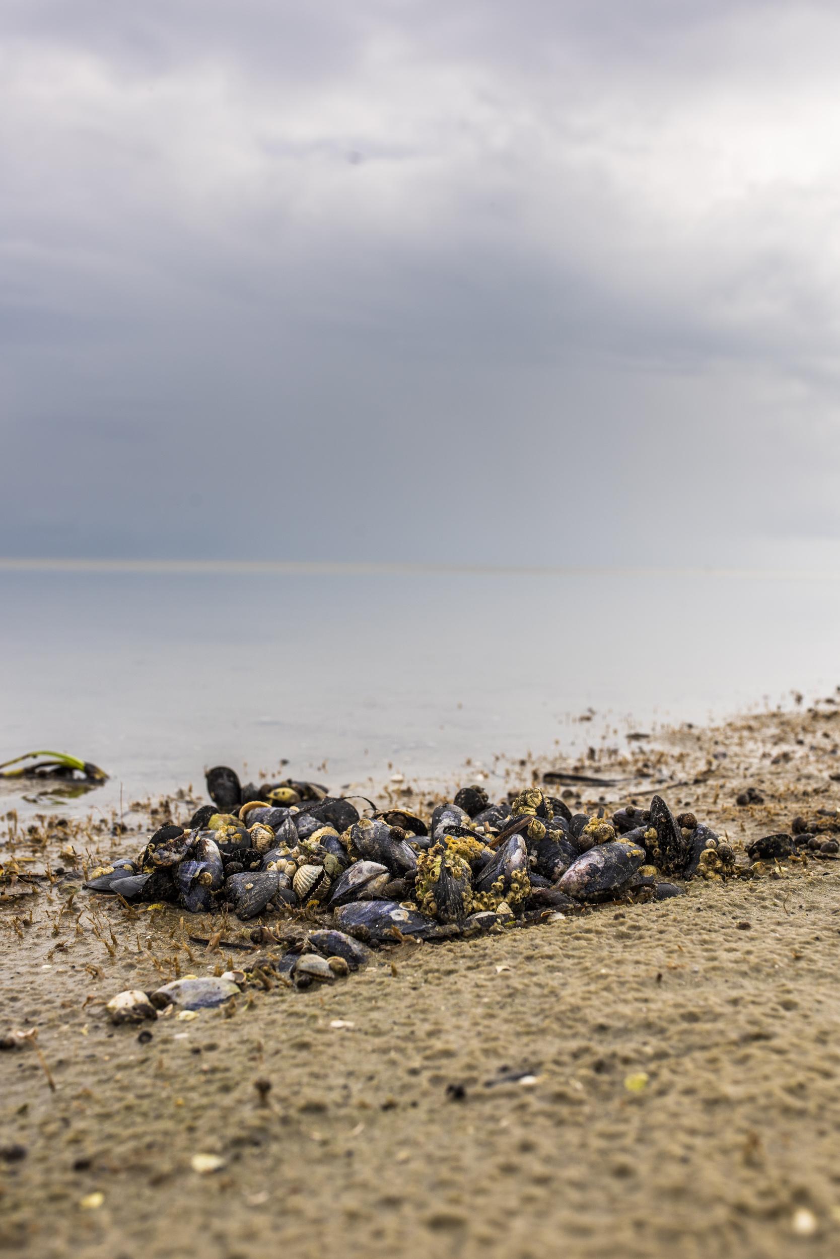 Musslor och snäcksal på stranden utanför stugan i Granborg.