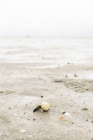 Snäckskal på stranden nedanför stugan. Brist på snäckskal var det då inte! Als Udde.