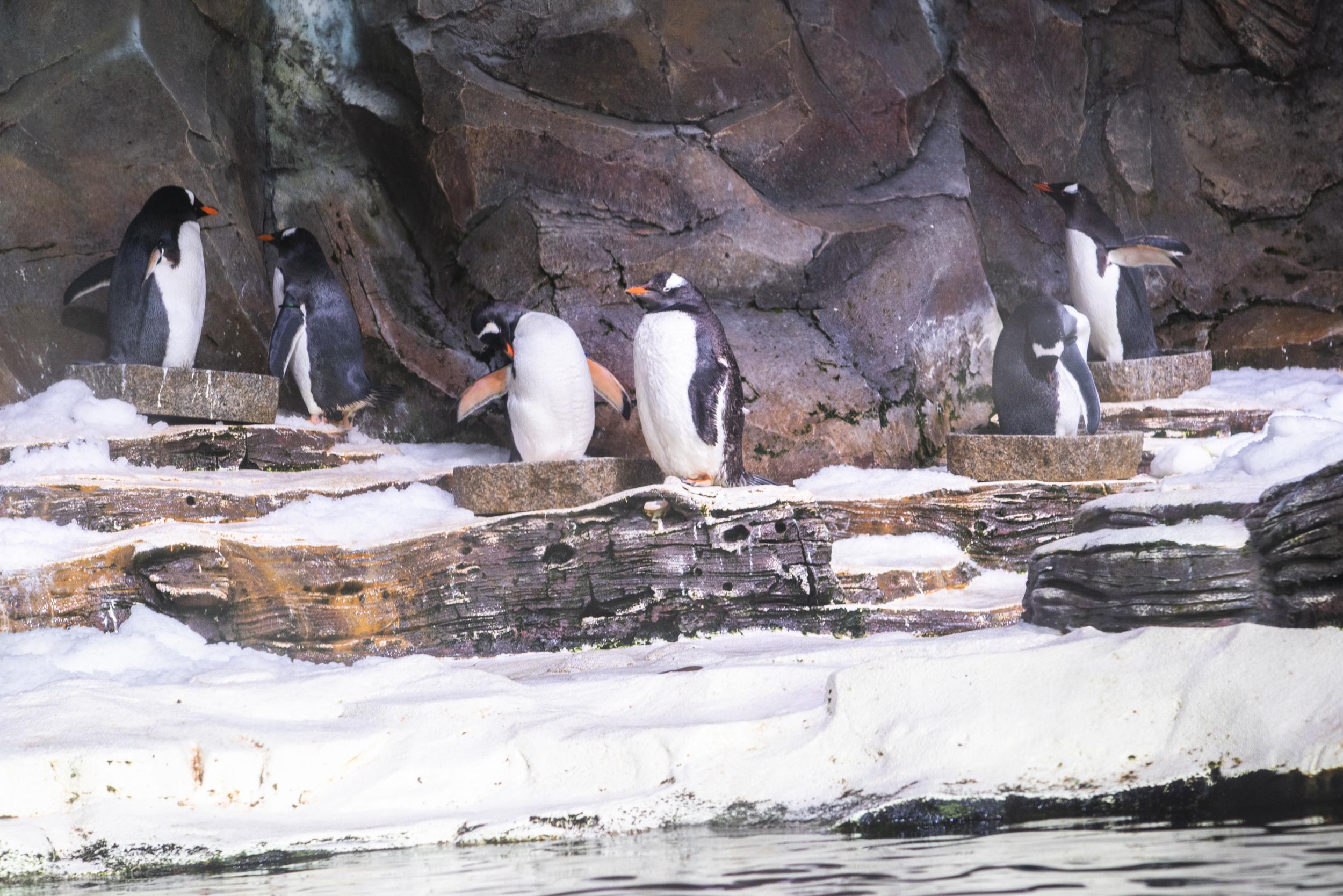 Och riktiga pingviner fanns det!