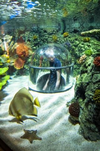Och varför inte nästan gå in i akvariet!?