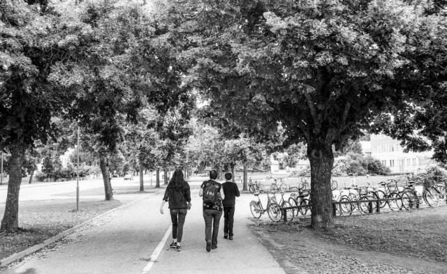 Uppsala, cyklarnas stad. Och alléernas!