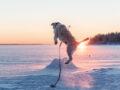 Vinterutflykt till Rörbäcks camping