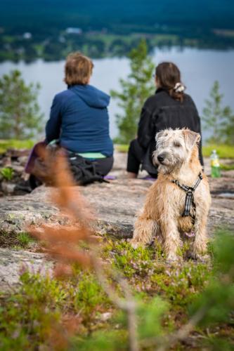 Utflykt till Öngårdsberget. Mycket intressanta dofter för en hund, vi andra kände bara skogsdoften...