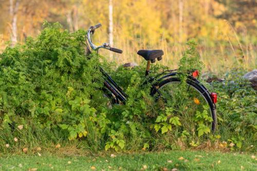 Känns som denna cykel inte har behövt jobba så hårt i sommar?