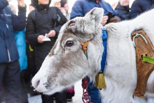 Alla är fina under rajden, även renarna. Jokkmokks marknad 2020.